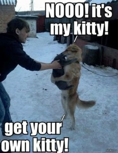 Нееет! Это мой котёнок! Заведи себе своего собственного котёнка!